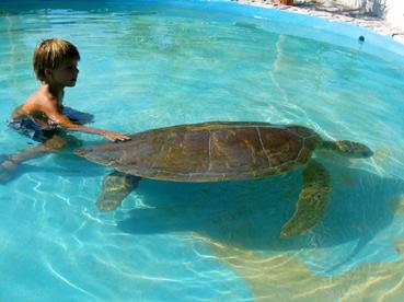 Les news 27 photos c te sud cuba avril 05 - Bassin pour tortue aquatique villeurbanne ...